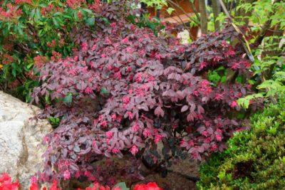 Φυτά με καλλωπιστική αξία στα φύλλα.